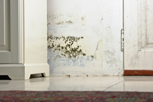 Mold and indoor air quality